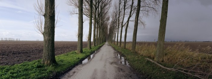 Straight rainy road lined with bare trees